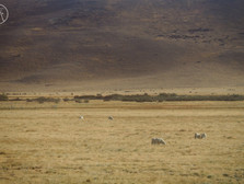 【Patagonia: 一切從牛開始】