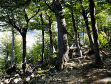 【Patagonia: W Trek 之乜樹?】