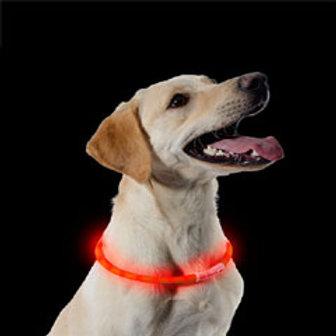 Dog Collar Luminoso - Usb Recarregável Flashing Light Collar