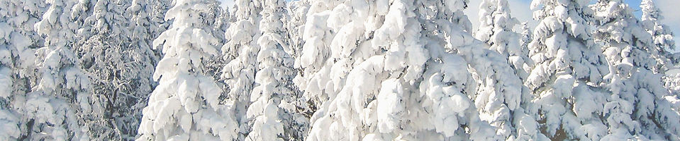 snowy-trees-edit-3.jpg