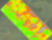 Example of NDVI of Wheat field.