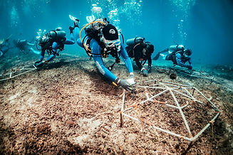 coralrestorationbluecornerconservation.j
