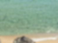 Screen Shot 2019-06-12 at 16.53.32_edite
