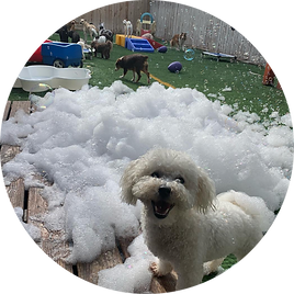 Dogday bubble cannon