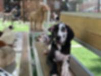 dog park daycare