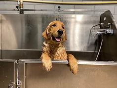 dog Bathing services