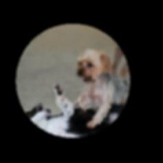 dog daycare indoor