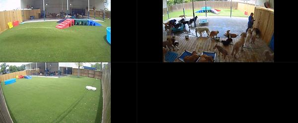 Screen Shot 2021-06-10 at 2.00.57 PM.png