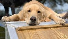 Dog boarding daycare