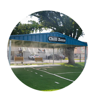 dog park chill zone daycare