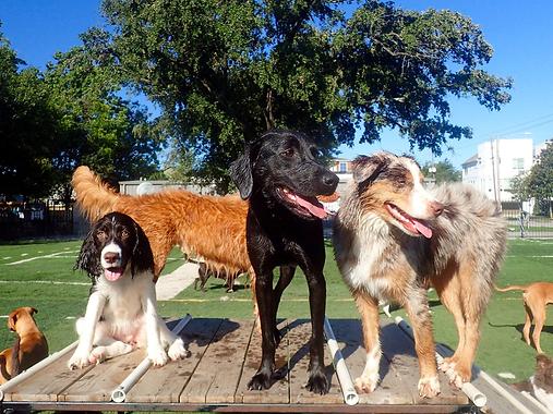 Dog daycare dog boarding