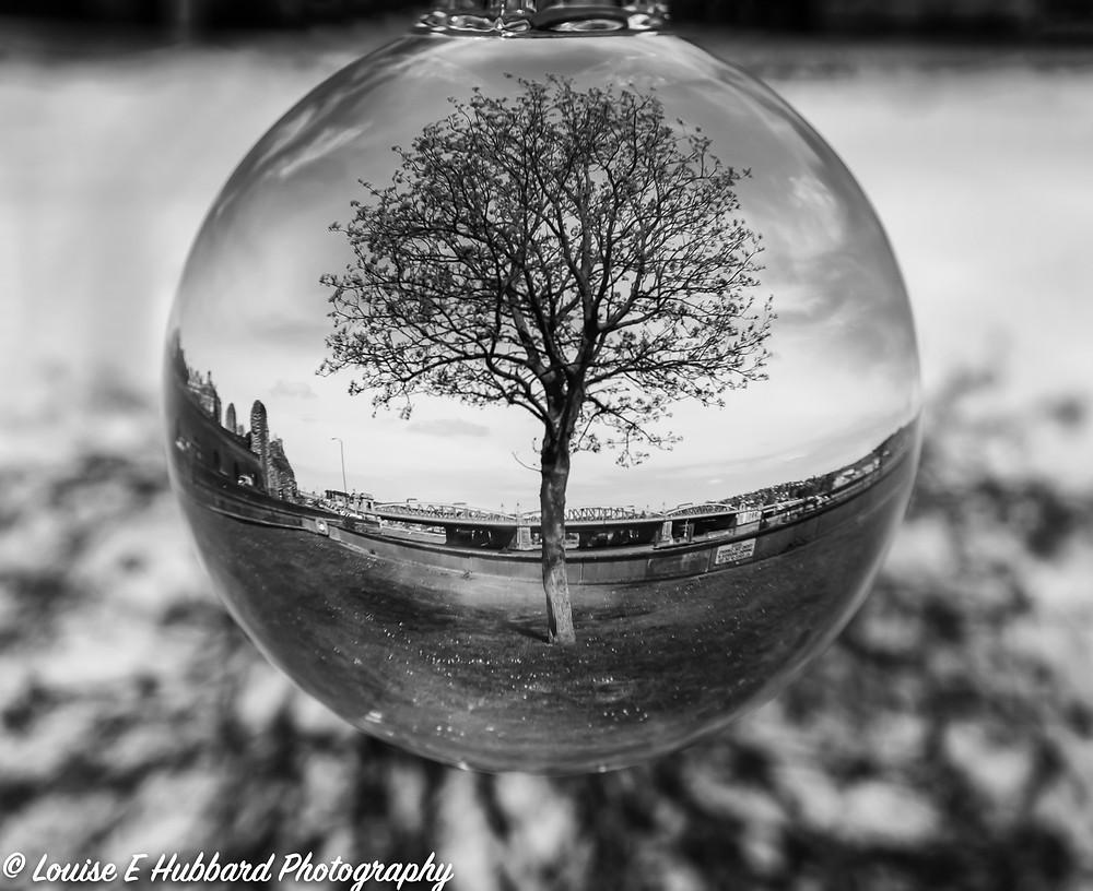 Lens Ball reflecting a tree