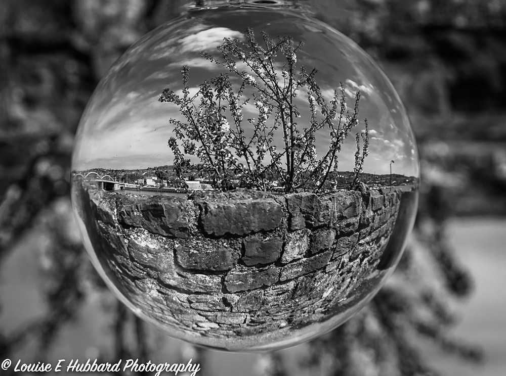 Plant and wall reflected in a lens ball