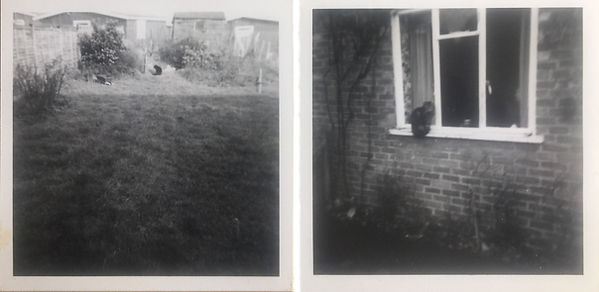 Old Photographs of Cats