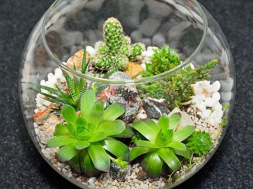Succulent Sand Art Jar/Terrarium