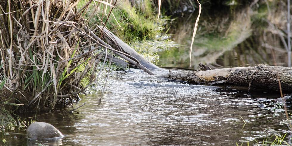 Rio Fernando de Taos Watershed Based Plan - Public Comment Deadline