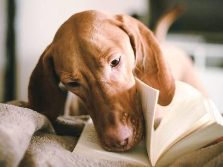 Kedy poisťovňa preplatí náklady na liečenie psíka?