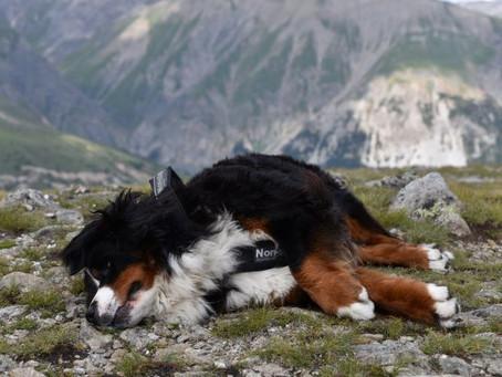Livigno - raj nielen pre psíka