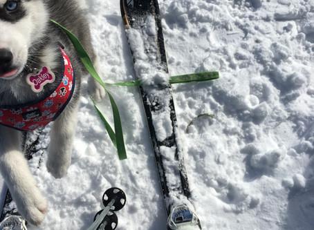 Na lyžiach so psom