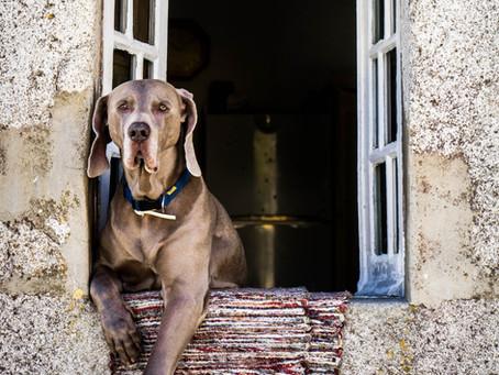 Prečo neexistuje samostatné poistenie psíka?