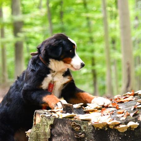 Register pomôže nájsť majiteľa strateného psíka