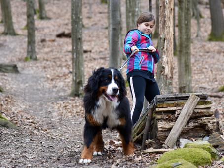Aktuálny prehľad poistení pre psa dostupných na Slovensku