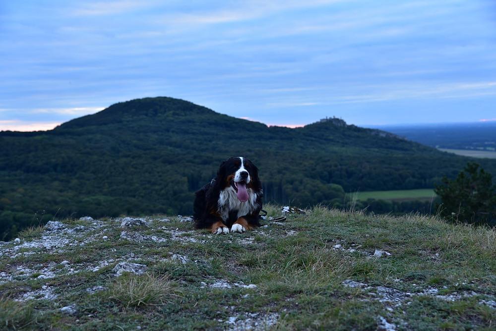 Aisha na Jelenej hore, za ňou Plavecký hrad a zapadajúce Slnko