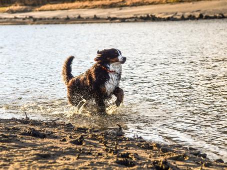Cestovné poistenie pre psa. Rady a skúsenosti.