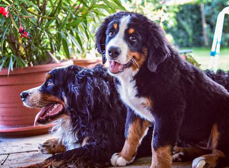 Poistenie psa v PetExpert