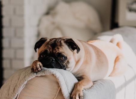 Buďte expertom na poistenie psíka