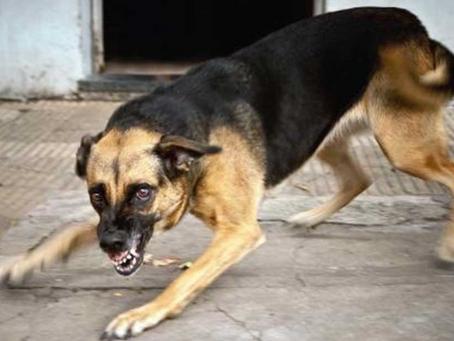 1837: Rabid dog runs amok in Cuckfield