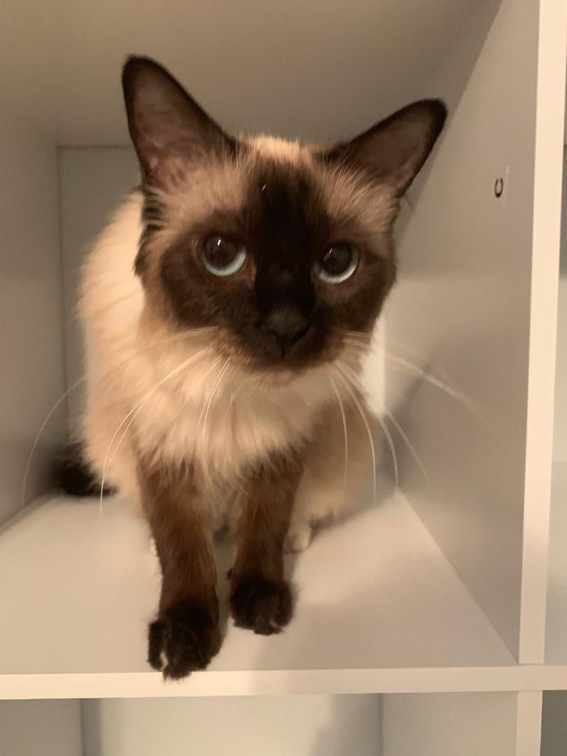 1-CAT.png