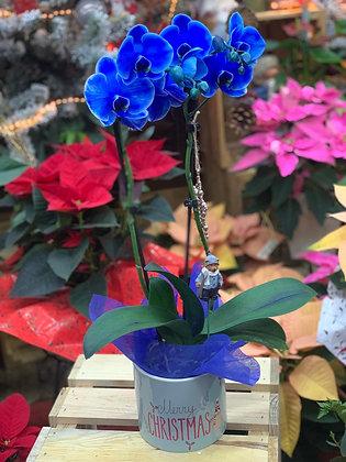 Orquídea Navidad