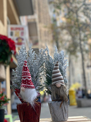 Chamaecyparis Mini Noel