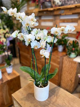 Orquidea Ceramica