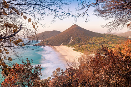 zenith beach, bushfire, autumn, dead leaves, dead trees, burnt, burn