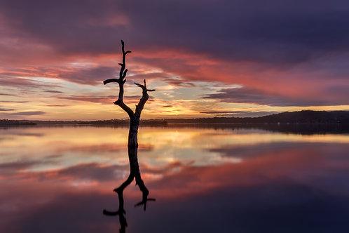 sunrise, sunset, reflection, dead tree, mangrove tree, colourful
