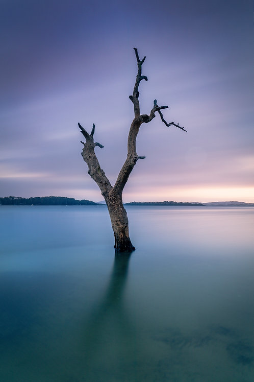 stump, dead tree, water, mangrove tree, old, dying, solitude