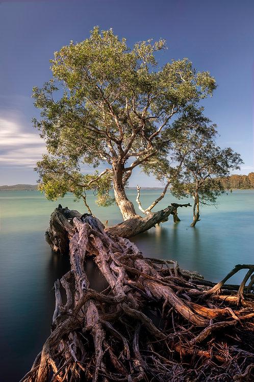 Tanilba Bay, Mallabula, lemon tree passage, mangrove, tree, water, blue