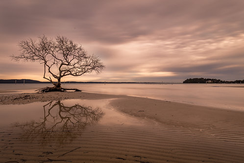 tree, mangrove tree, reflection, sand, beach