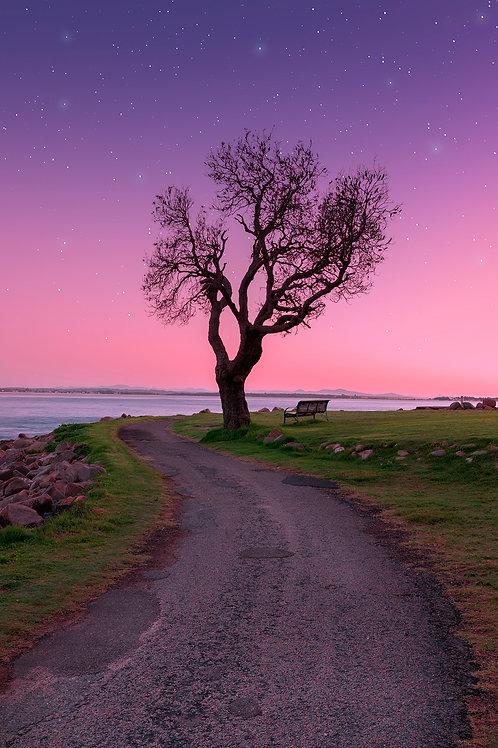 twilight, shoal bay, tomaree, sunrise, stars, canon, pink, tree