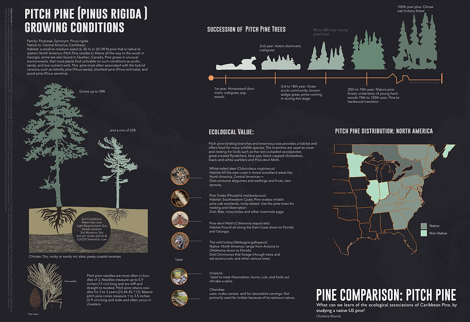 5.PITCHPINE_COMPARISON.jpg