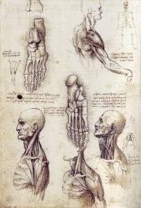 Anatomical Study from Cadavers