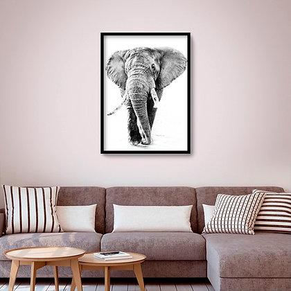 Quadro com moldura Elefante