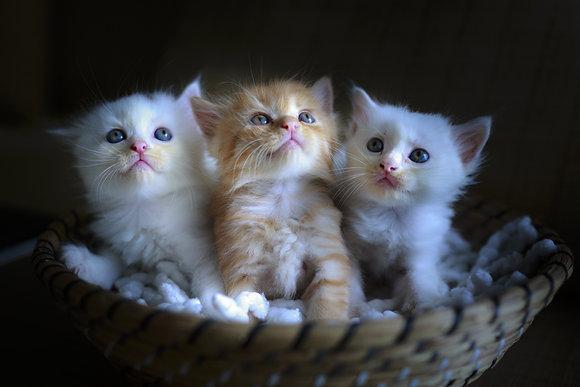 Placa Decorativa Cats