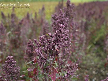 Quinoa – ein extrem vielfältiges Nahrungsmittel