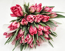 Speciality Tulip