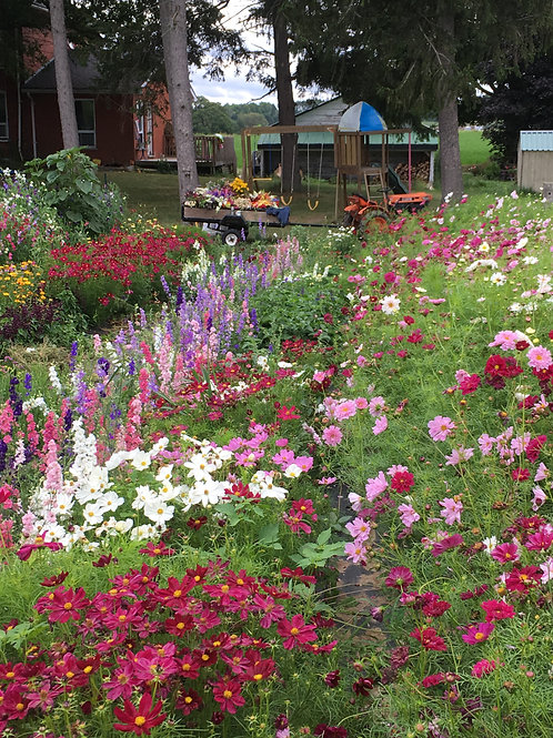"""Pick Your Own"" Flower Tickets for Saturday, August 29th from 9:30-11:30am"