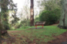 red leg wood bench in woods among trees