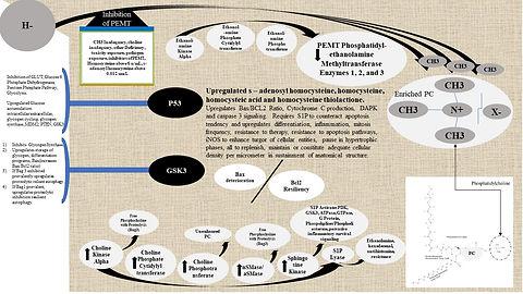 Pathology, Foundational.jpg